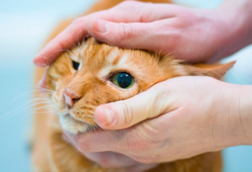можно ли кошке давать ацикловир