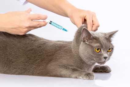 как сделать укол кошке