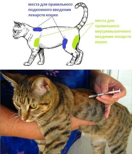 как делать укол кошке