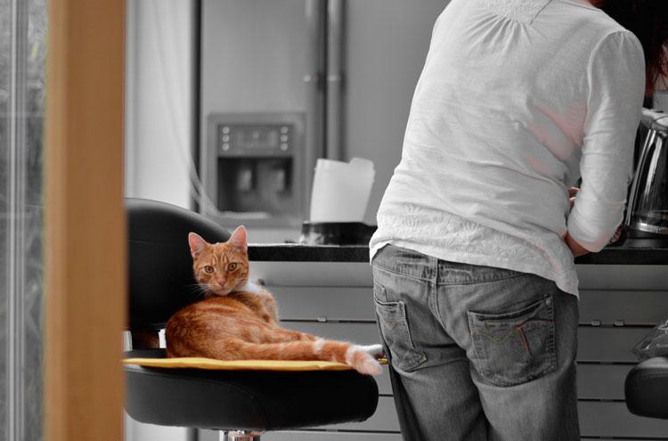 можно ли кормить кошку сырой рыбой