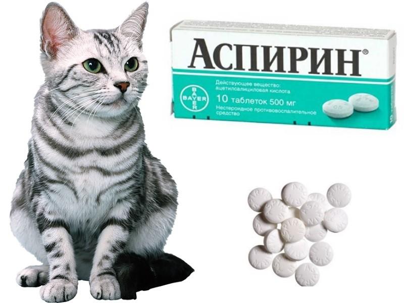 аспирин кошке