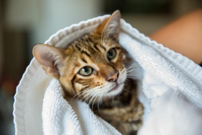Нужно ли мыть и купать кошку