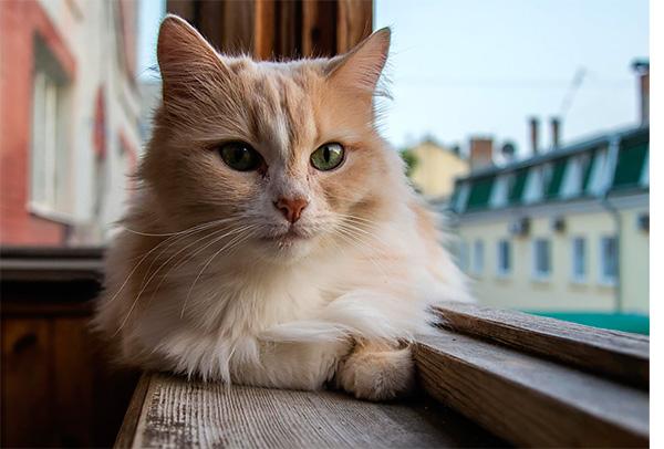 нужны ли кошке прививки