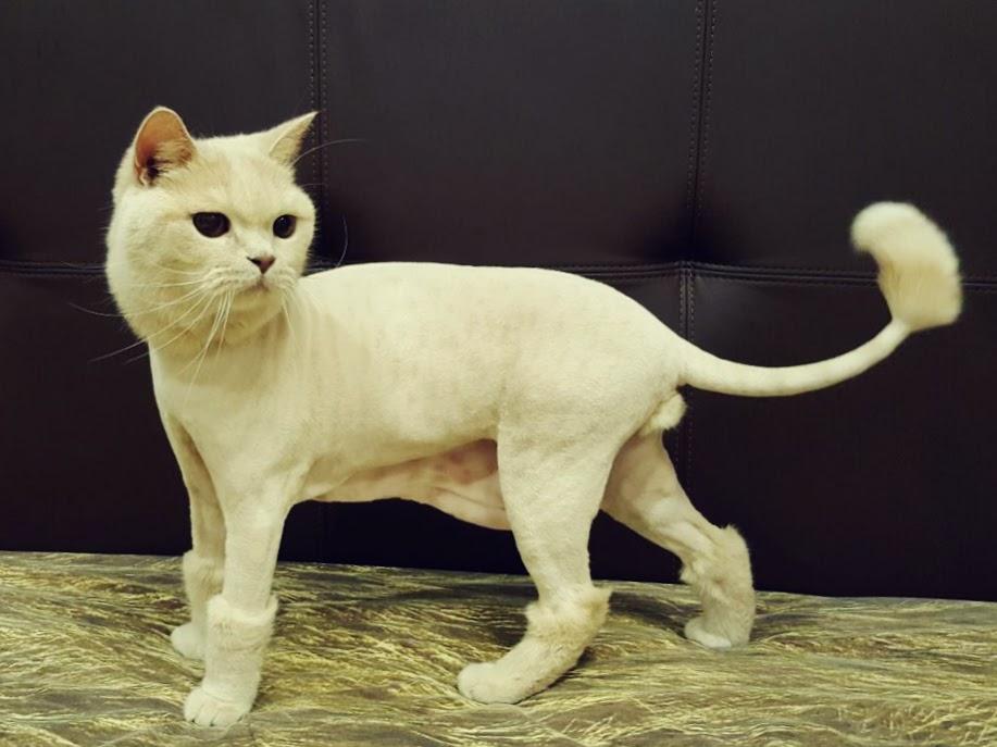 нужно ли стричь кошек